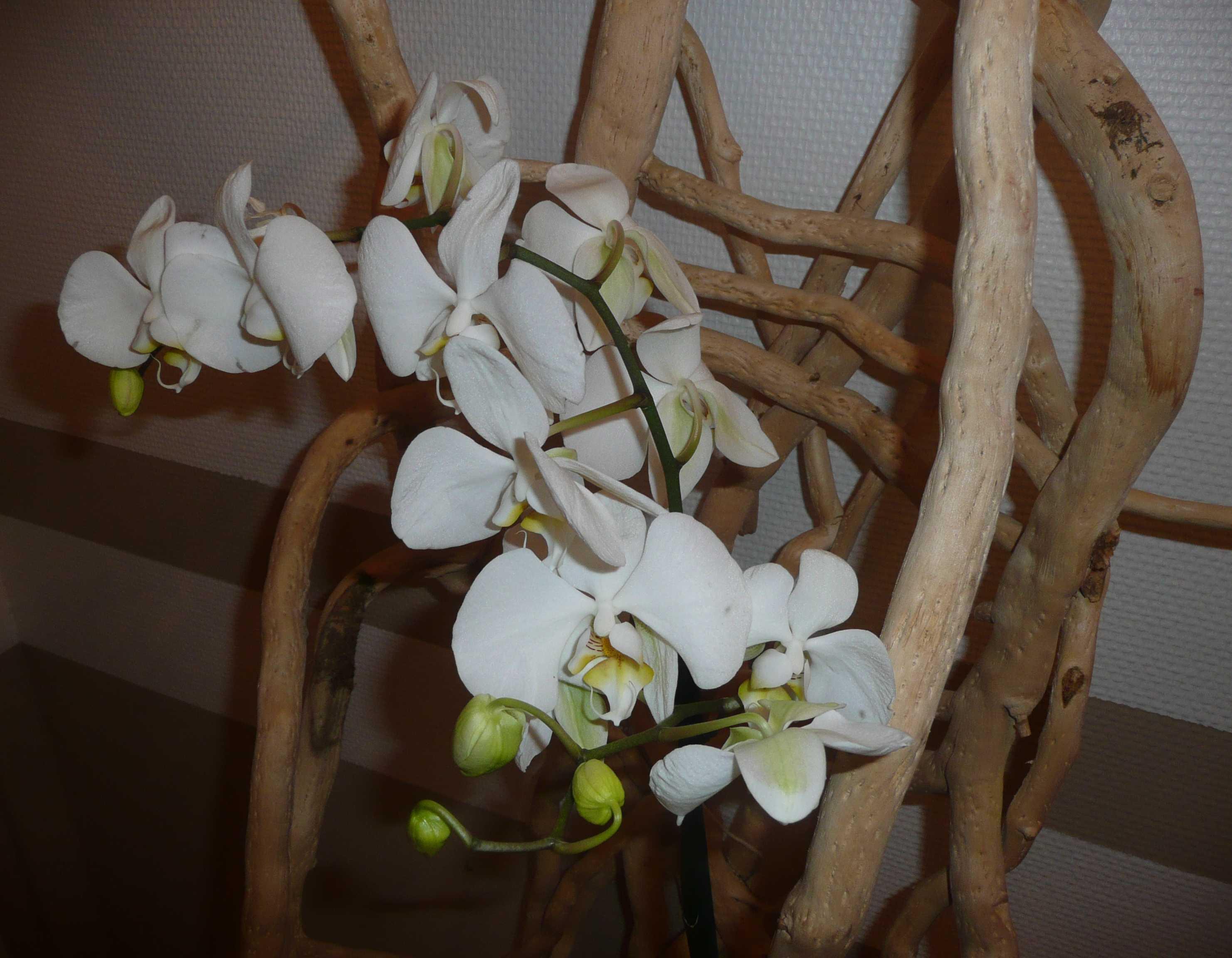 Jardin d 39 hiver les orchid es for Bois flotte suisse