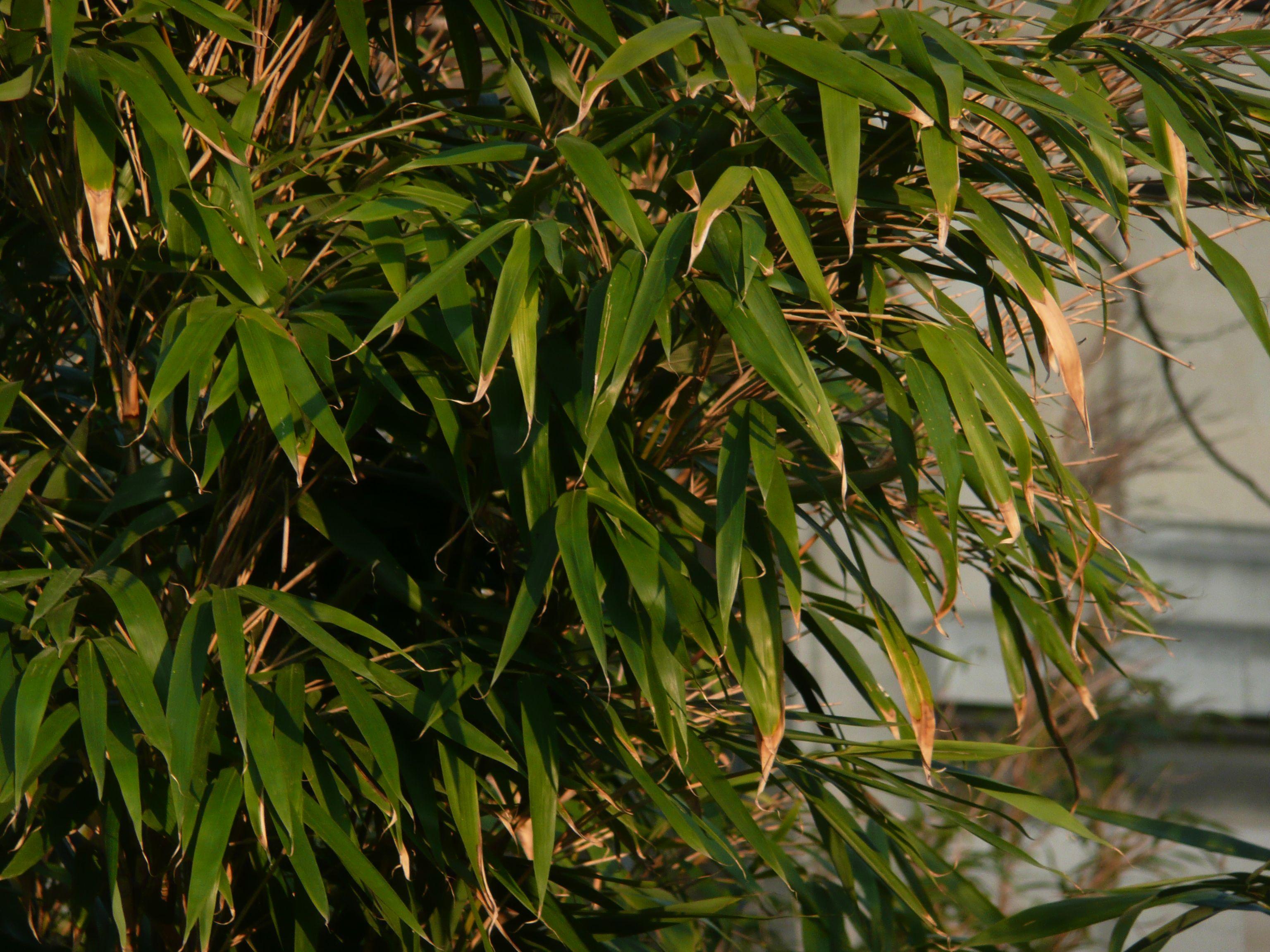 Le japon en fleurs au jardin des plantes for Au jardin des plantes