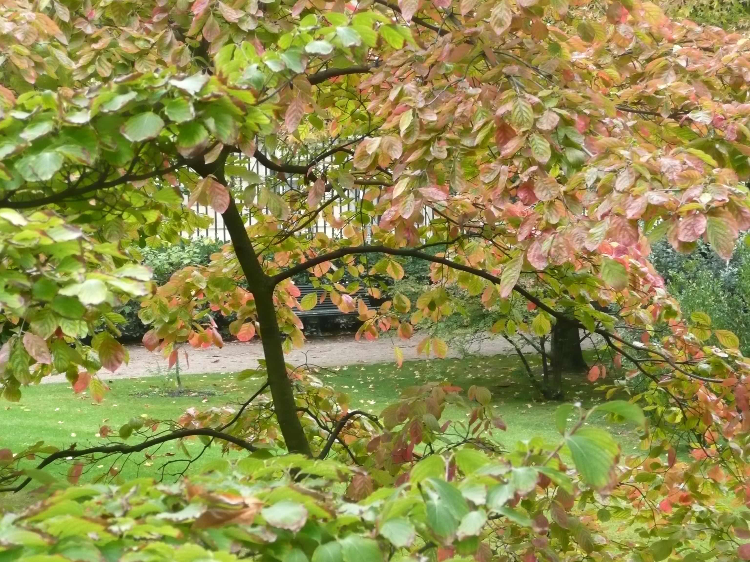 Arbres en majest suite for Arbres jardin du luxembourg