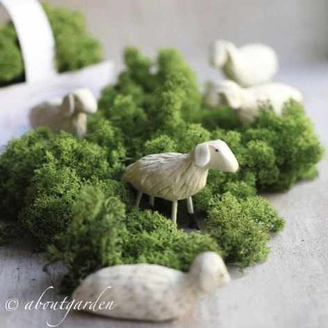 About garden Moutons et mousse