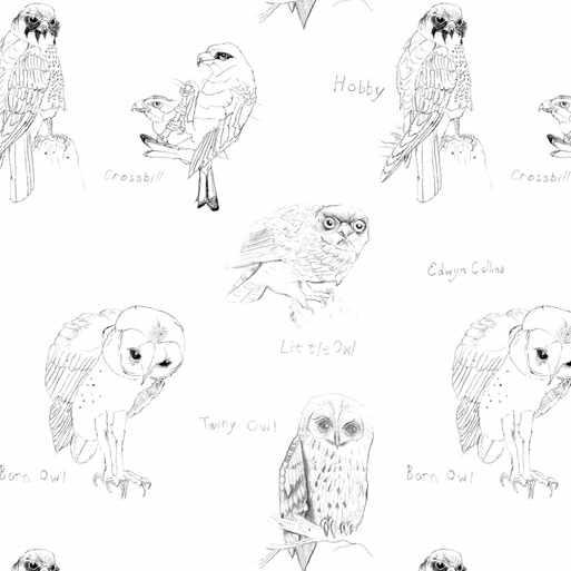 papier-peint-hiboux-little-owl-and-crossbill-par-edwin-collins-pour-elli-popp
