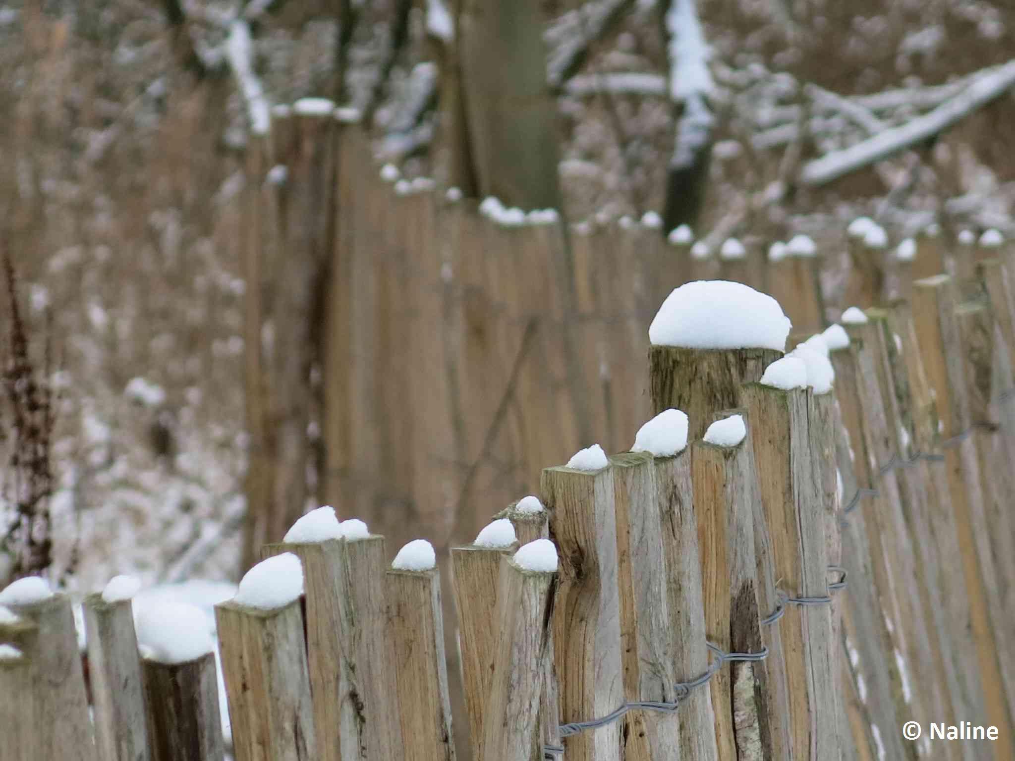 Piquets sous la neige BLOG NALINE 1