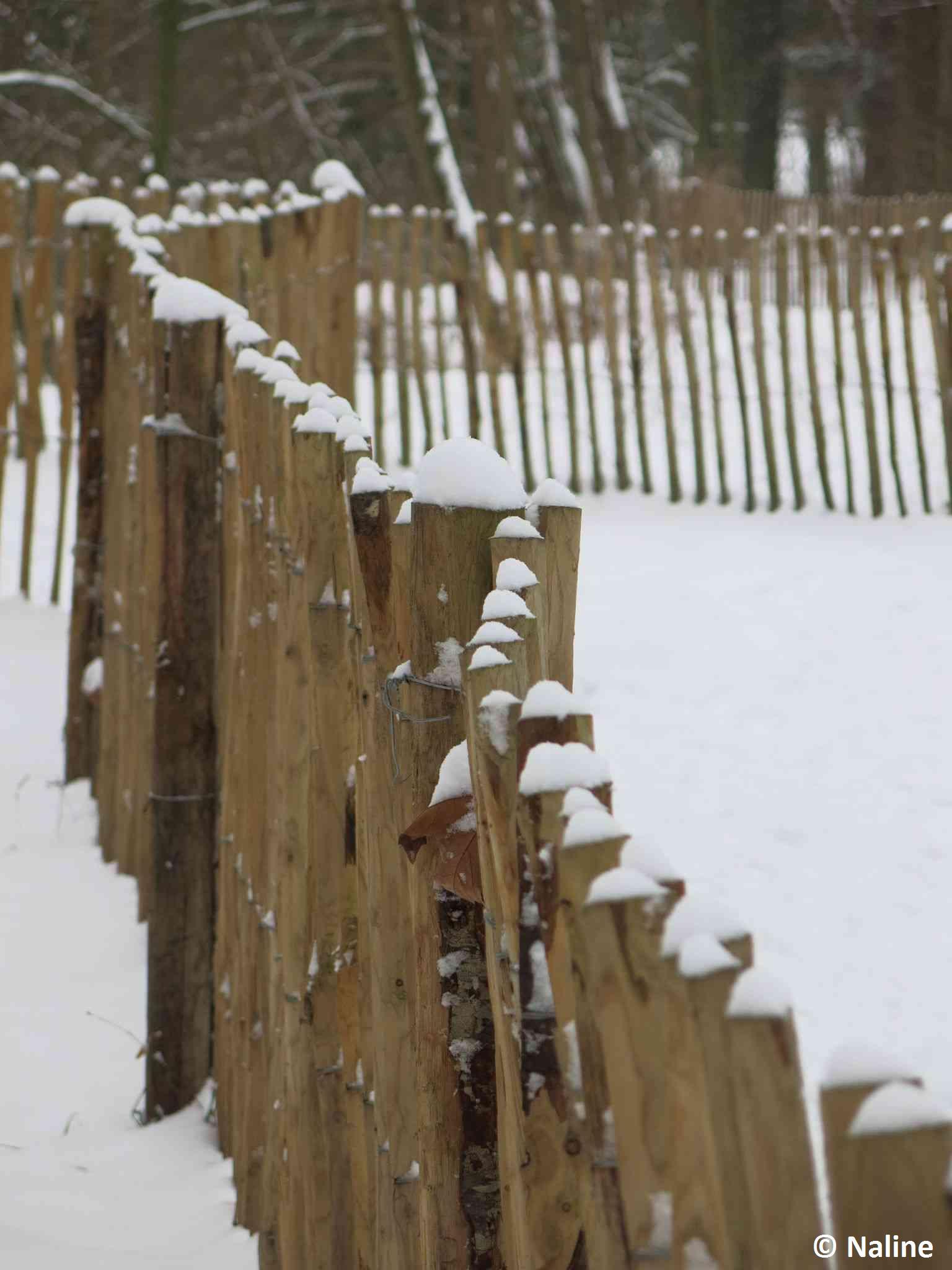 Piquets sous la neige BLOG NALINE 3