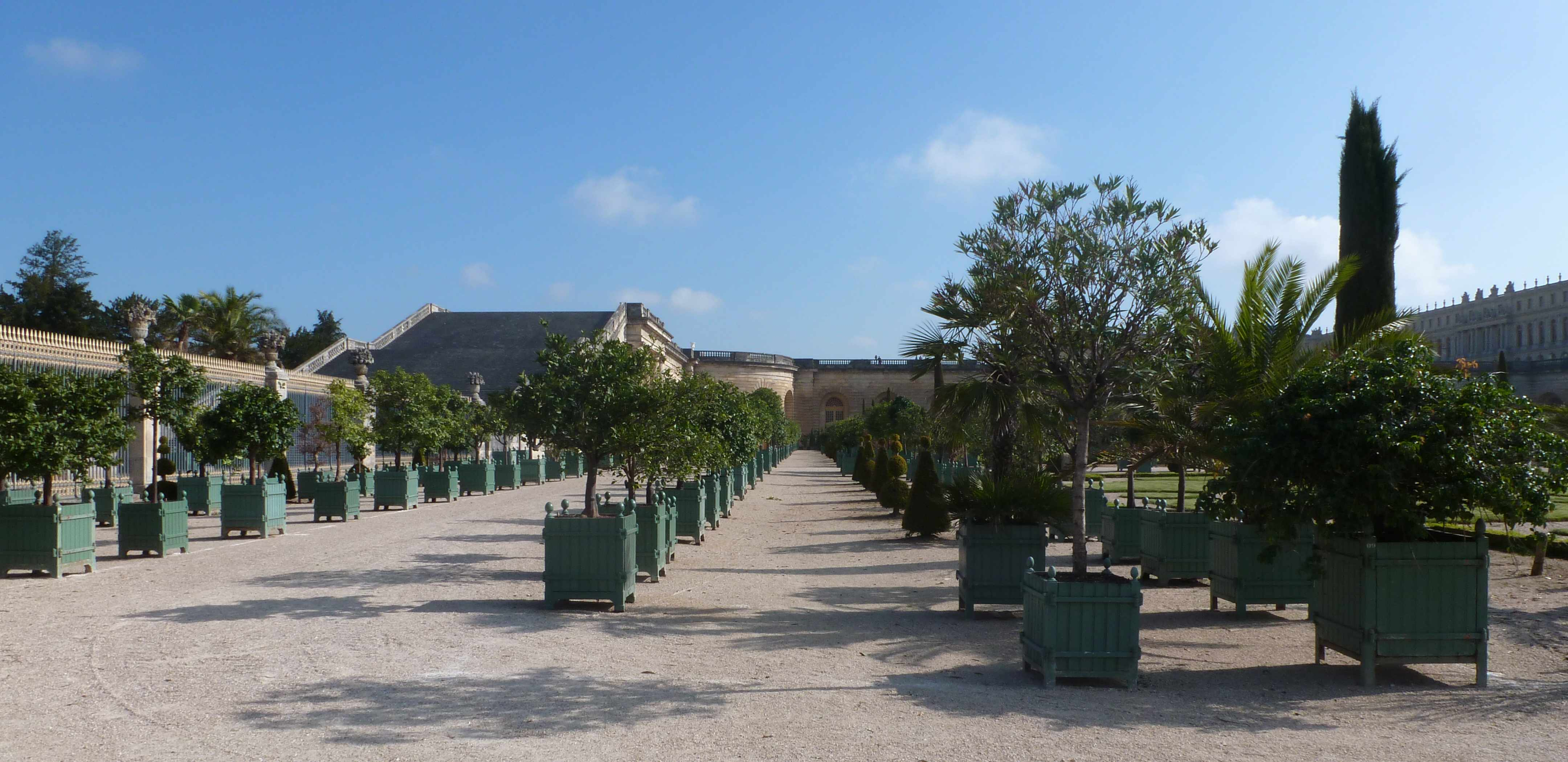 Versailles orangerie alignements 05-2013