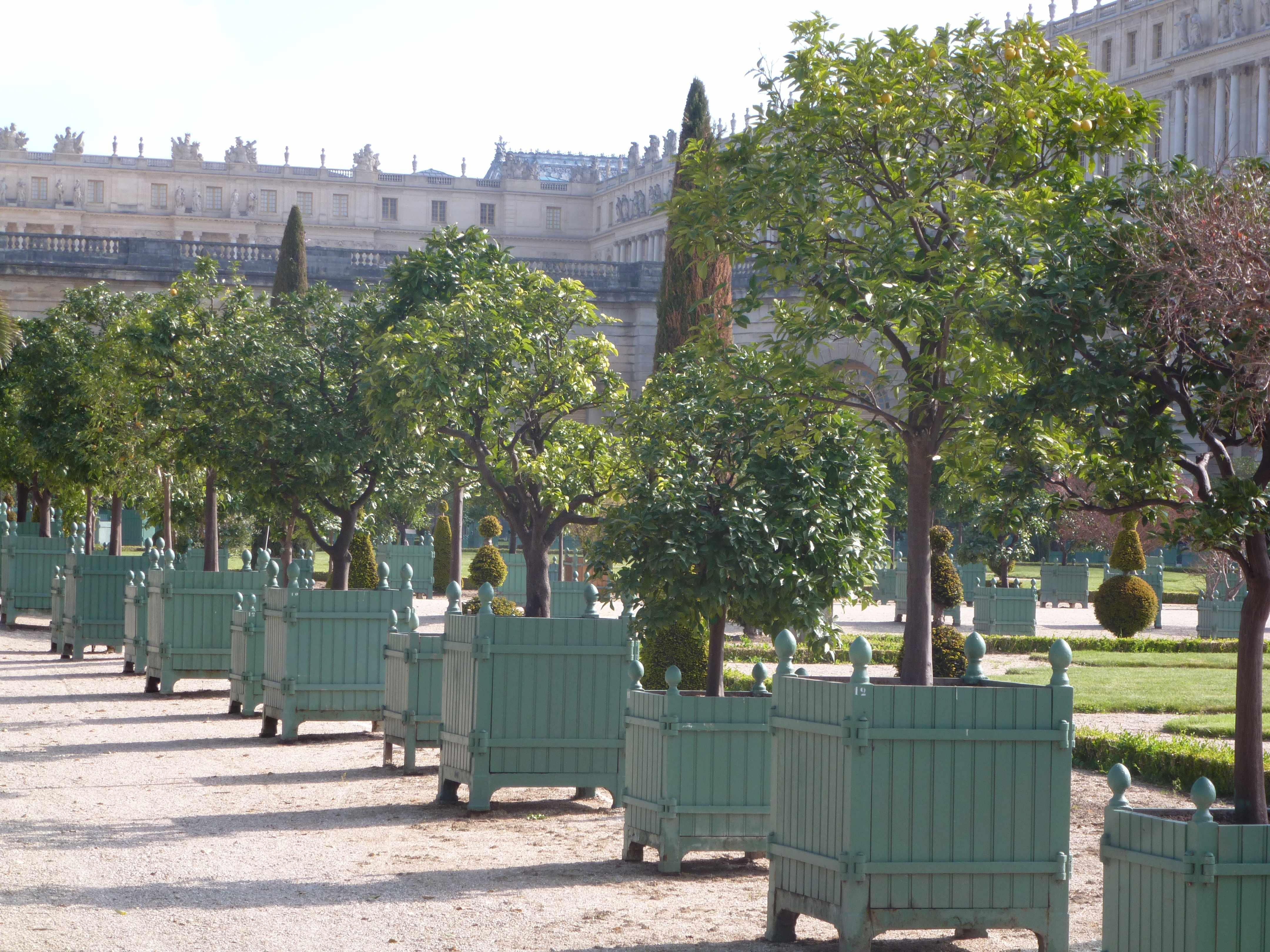 Versailles orangerie caisses agrumes 05-2013