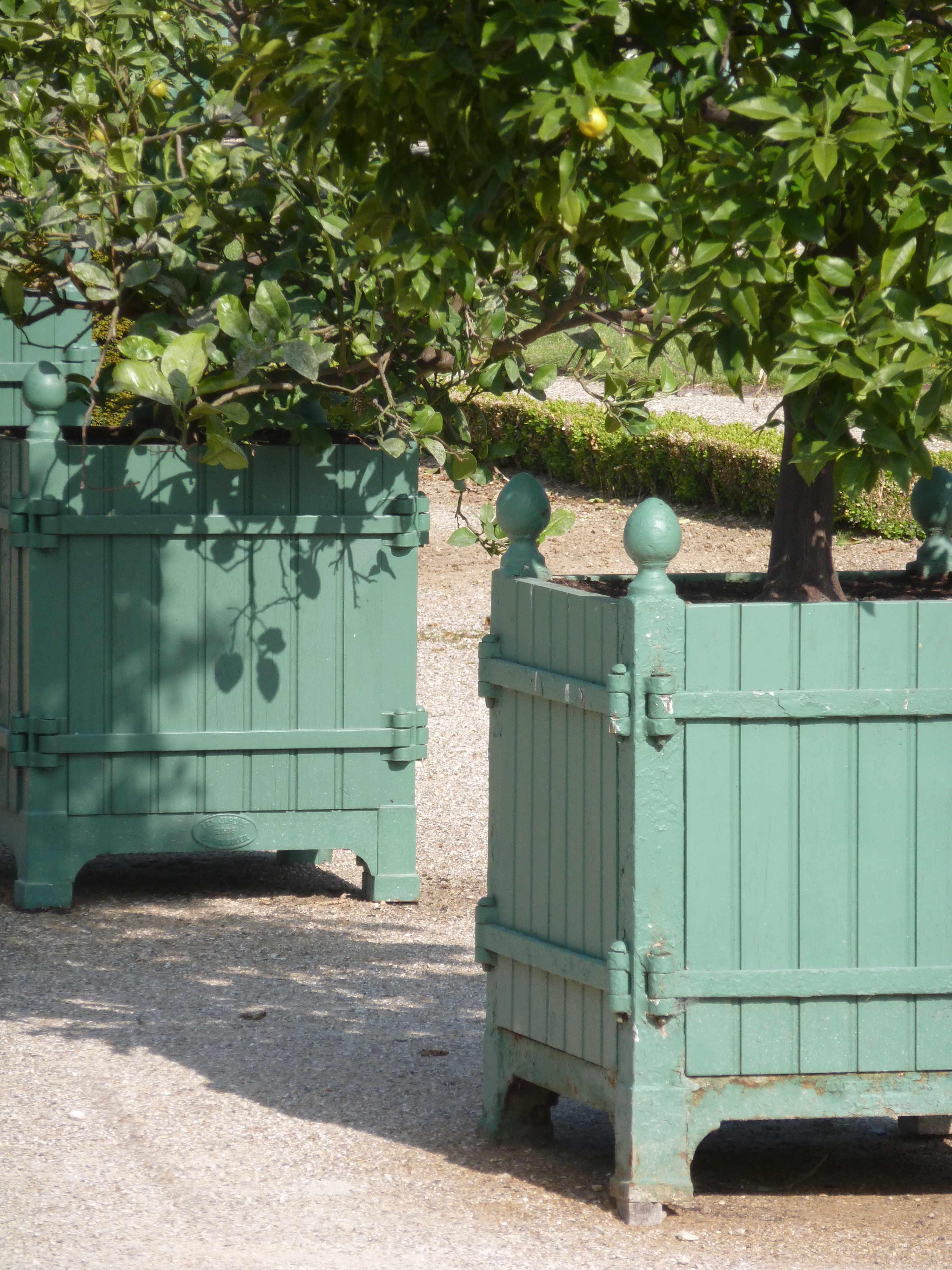 Versailles orangerie caisses citronniers
