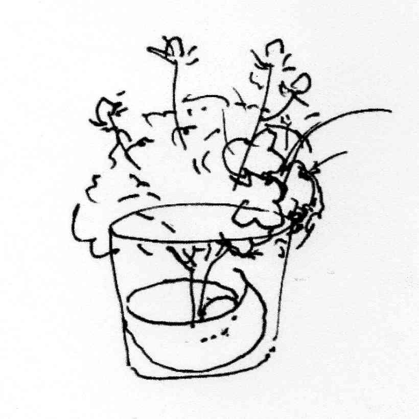 Bouquet mariage Croquis Denis