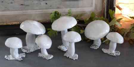 Mushroom Reves-d-argile 2011