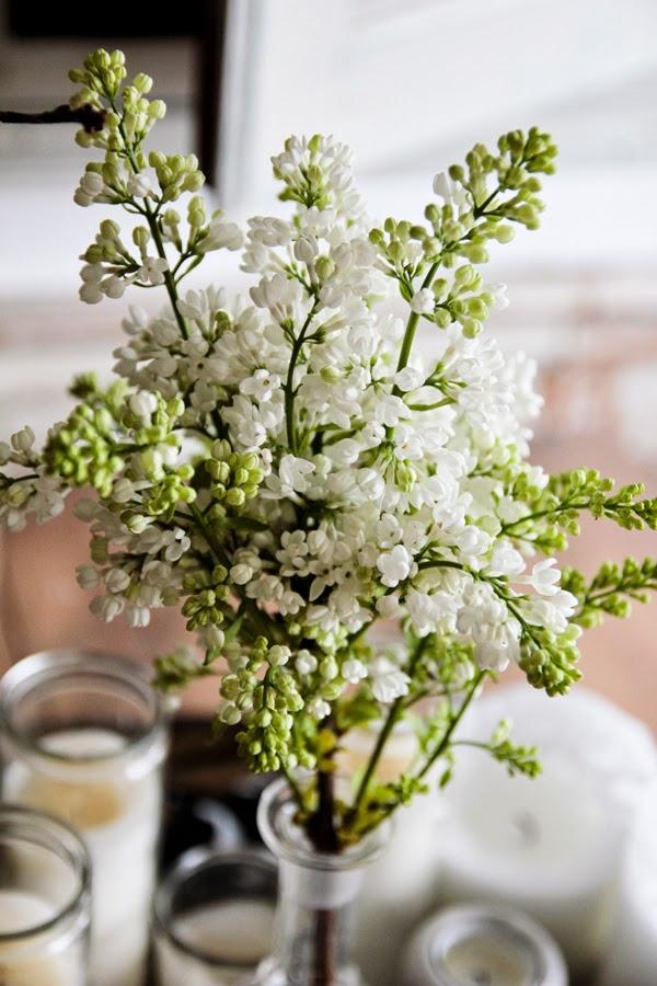 Lilas blanc Vintage house