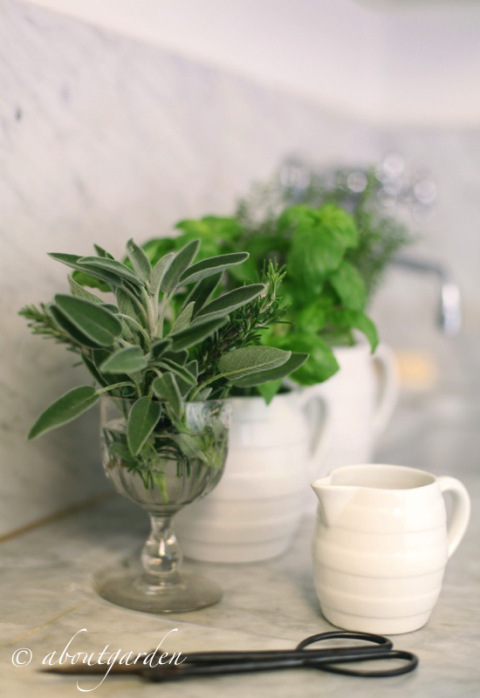 herbes aromatiques Aboutgarden