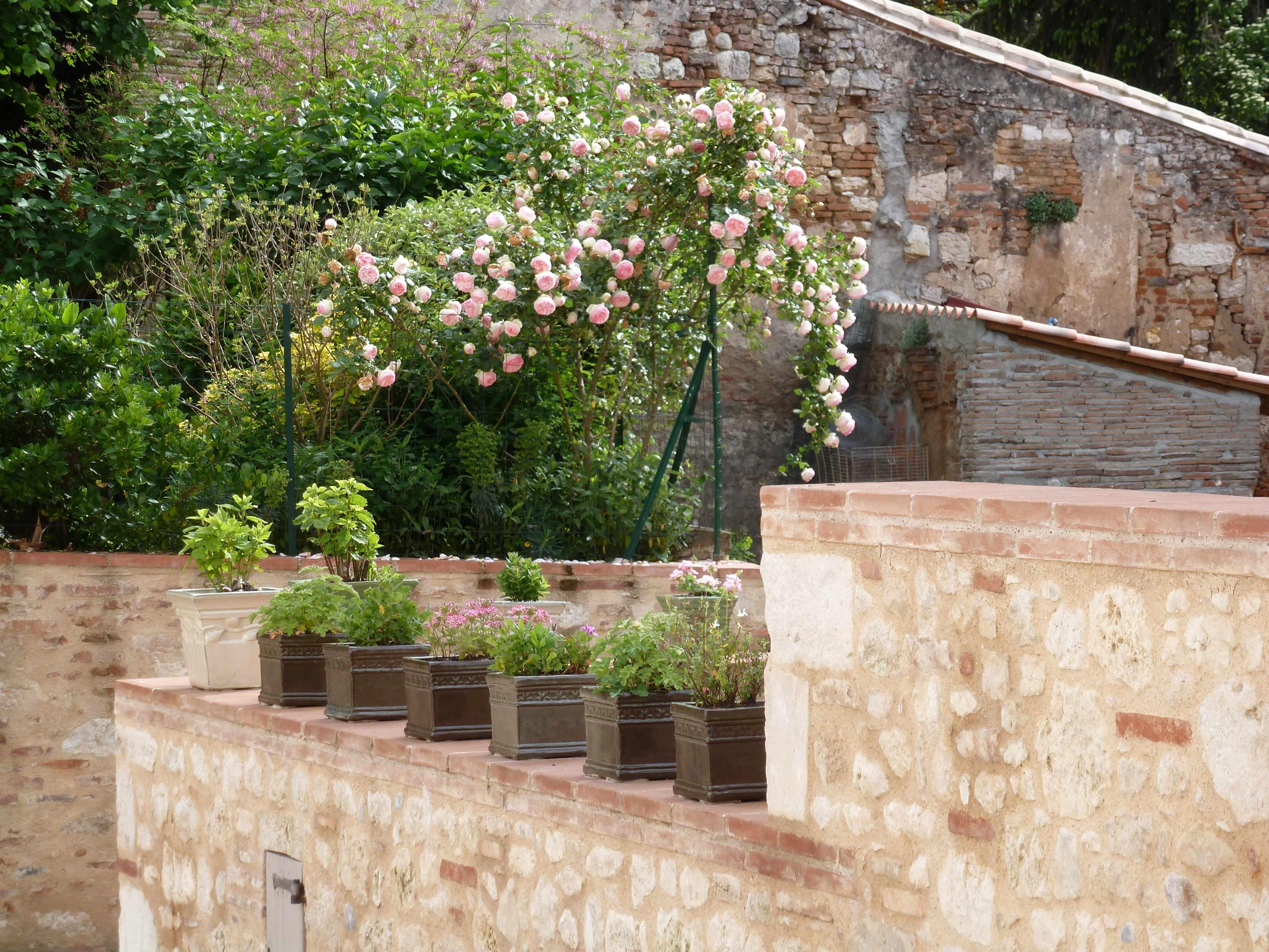 Auvillar-rosier-Pierre-de-Ronsart-2014-05