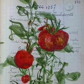 Dernieres tomates de la saison