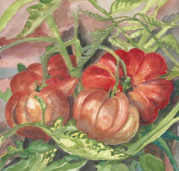 tomates aquarelle Aurore Janon