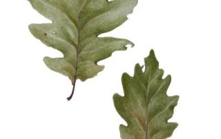 feuilles-d-automne Simonetta Charugi