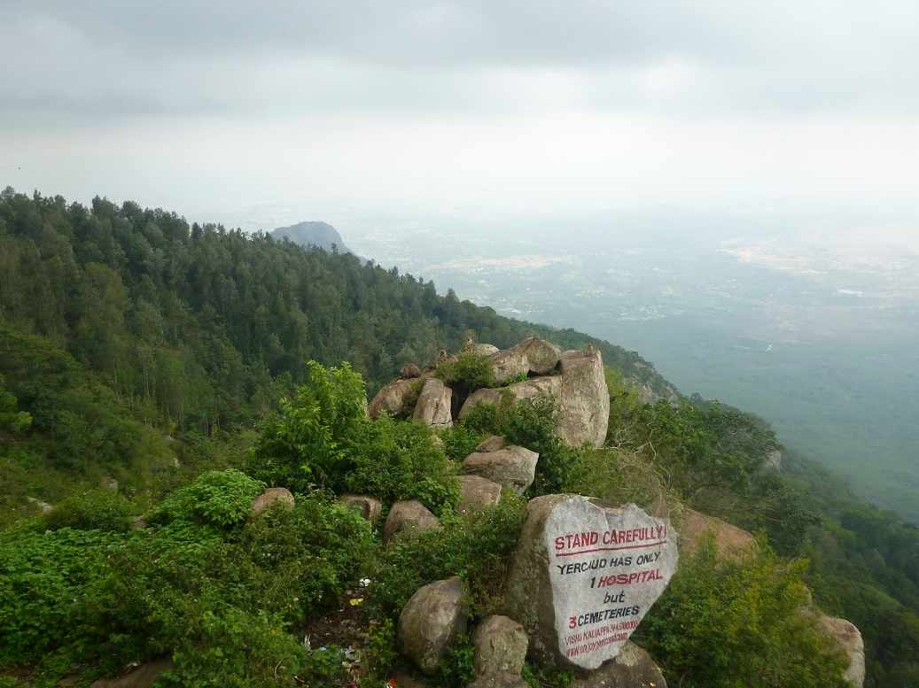 India Yercaud singes sur rochers