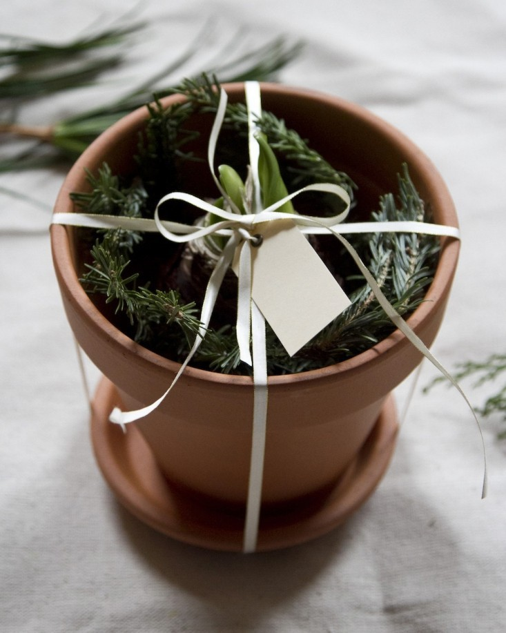 last-minute-gifts-Remodelista-amarilys-bulbe