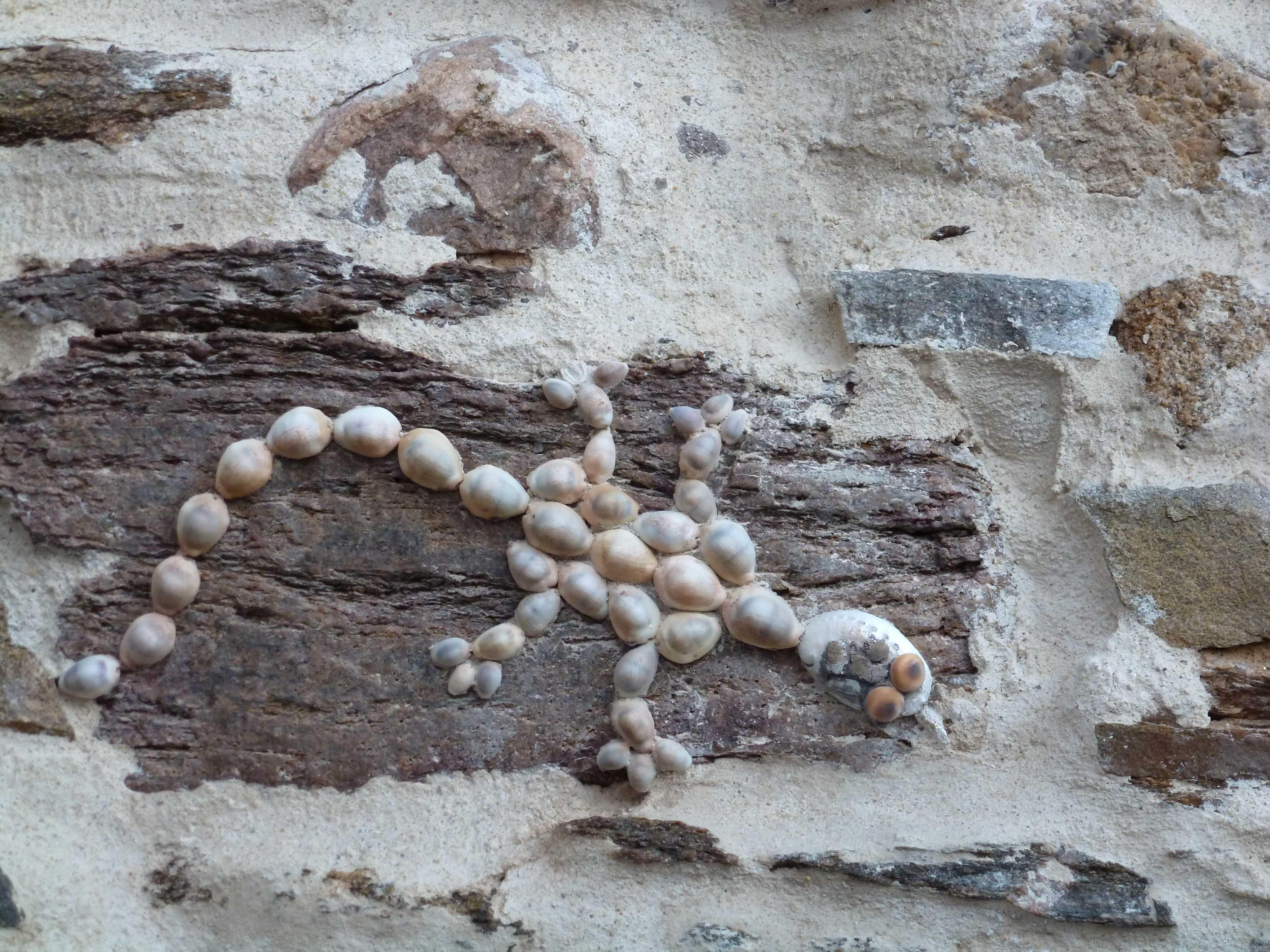 lezard de coquillages Ile-Penotte Sables d'Olonne 2014