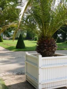 2016-06 Serres-d-Auteuil palmier-en-caisse