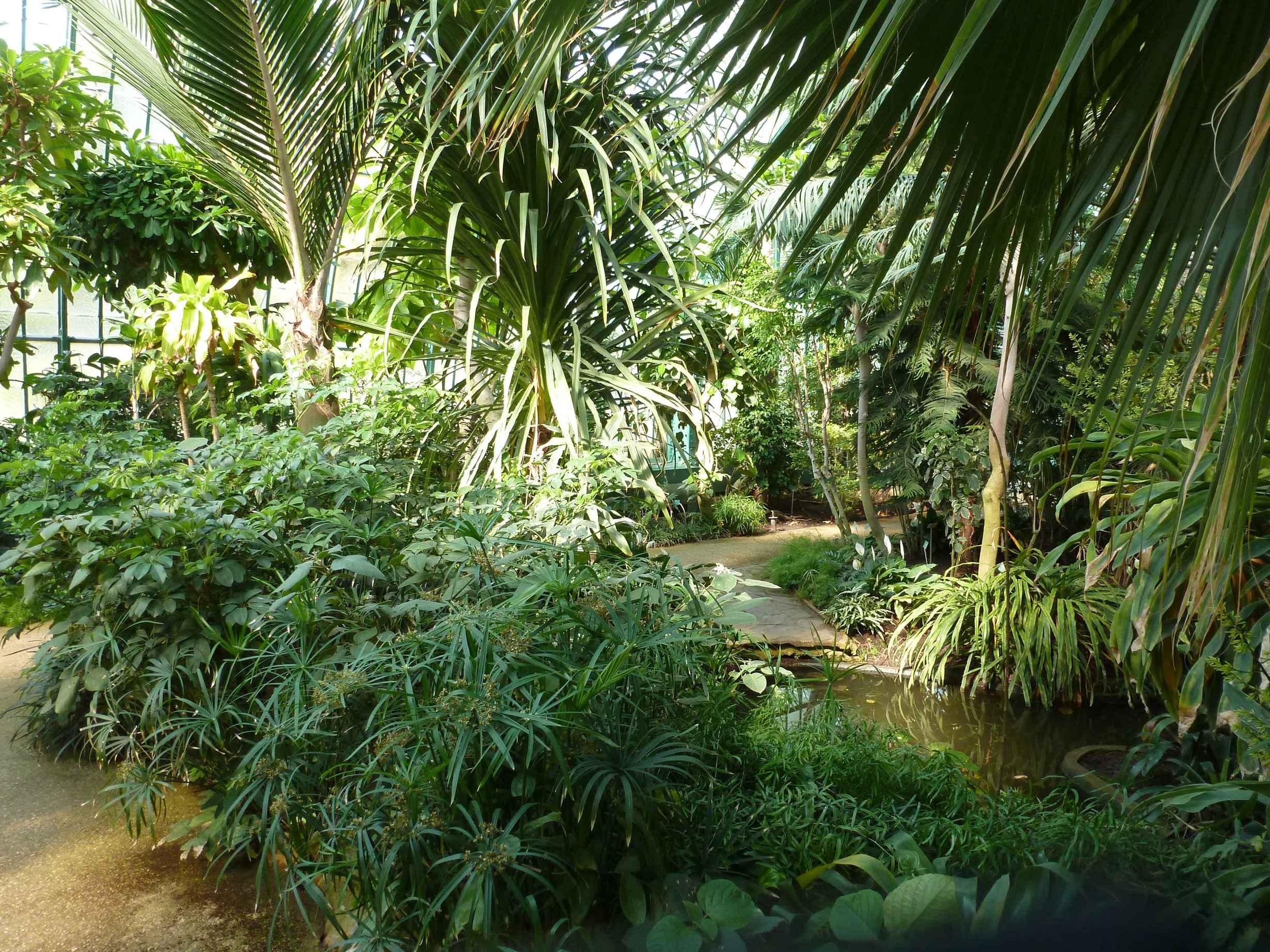 2016-06 Serres-d-Auteuil_serre-subtropicale-palmarium