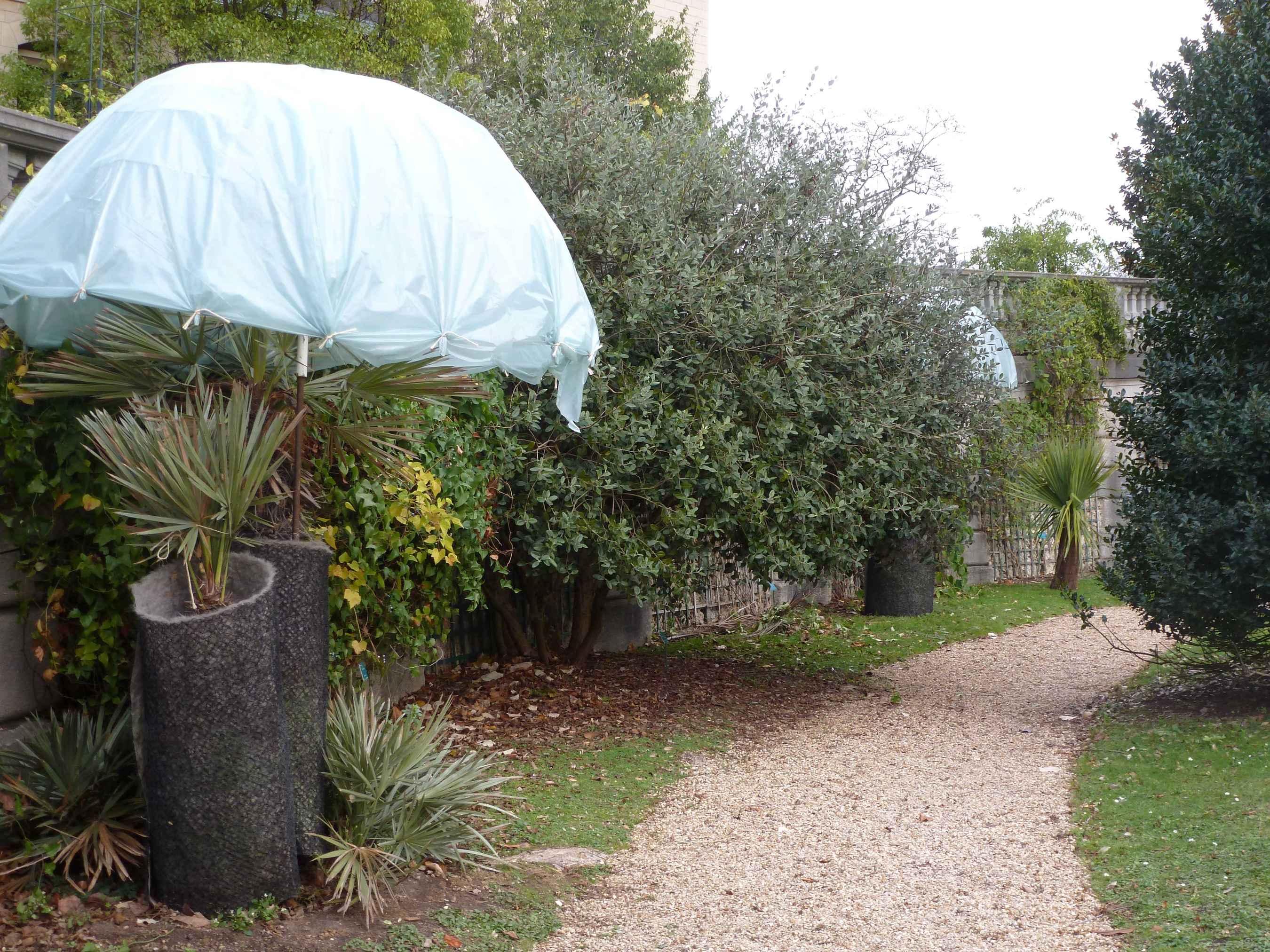 Serres-d-Auteuil 2015-11 hivernage-palmiers