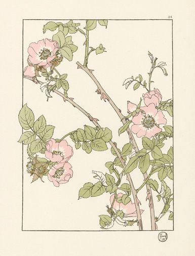 foord-pochoir-flower-studies-1901
